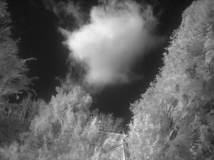 Infrared #5