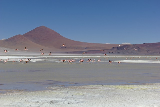 Flamingos at Laguna de Pujsa